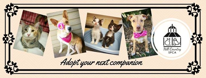 Hill Country SPCA cover