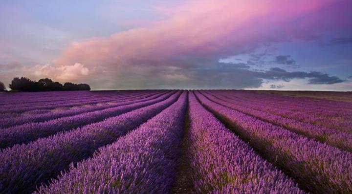 Lavender Retreat Capitol Hill cover