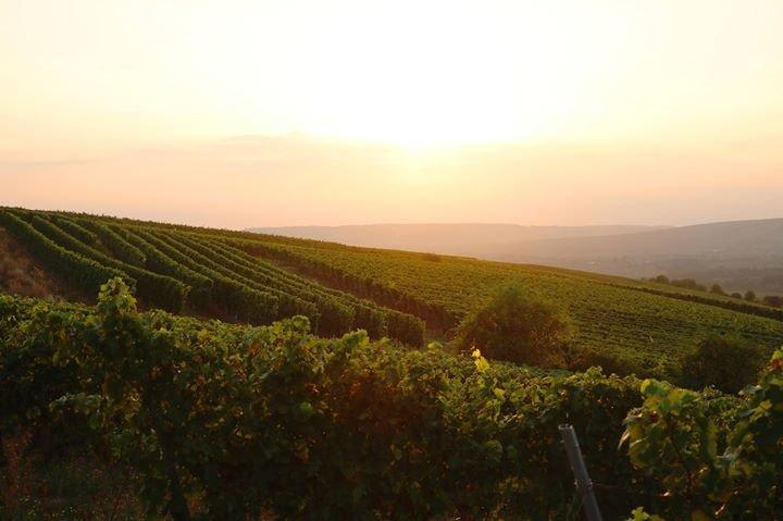 Weingut Prinz Salm cover