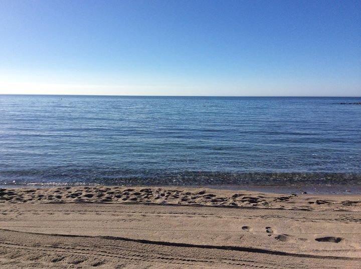 Alfie's Beach Bar Marbella cover