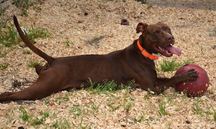 Jasper Animal Rescue Mission cover