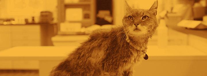 Plumb's Veterinary Drugs cover