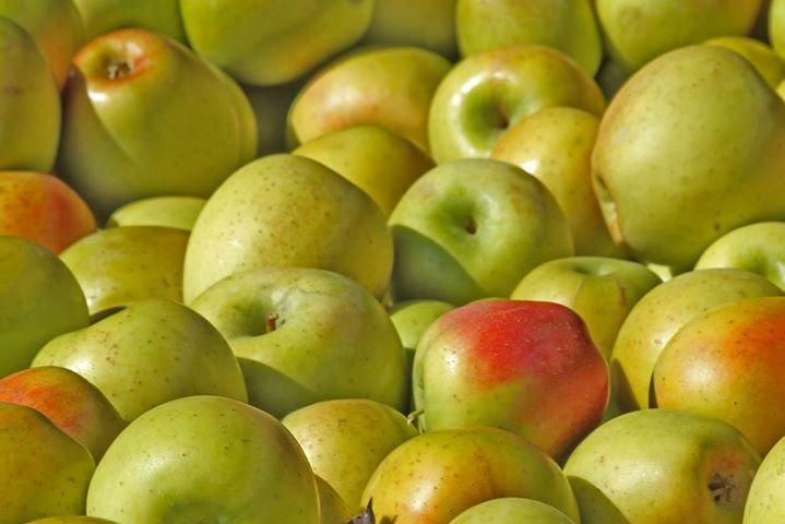 Toigo Orchards cover