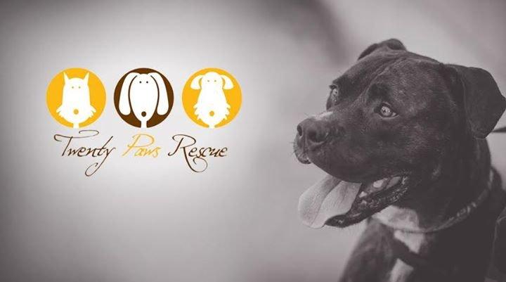 Twenty Paws Rescue cover