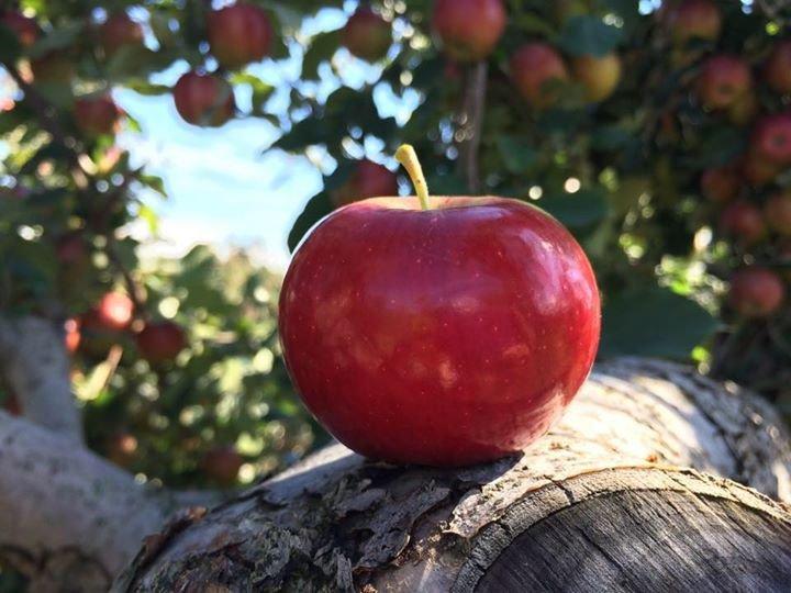 Samascott Orchards cover
