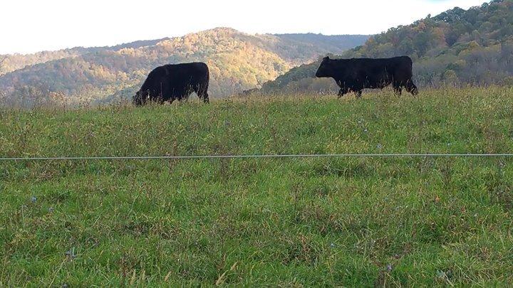 Grayson Natural Farms cover