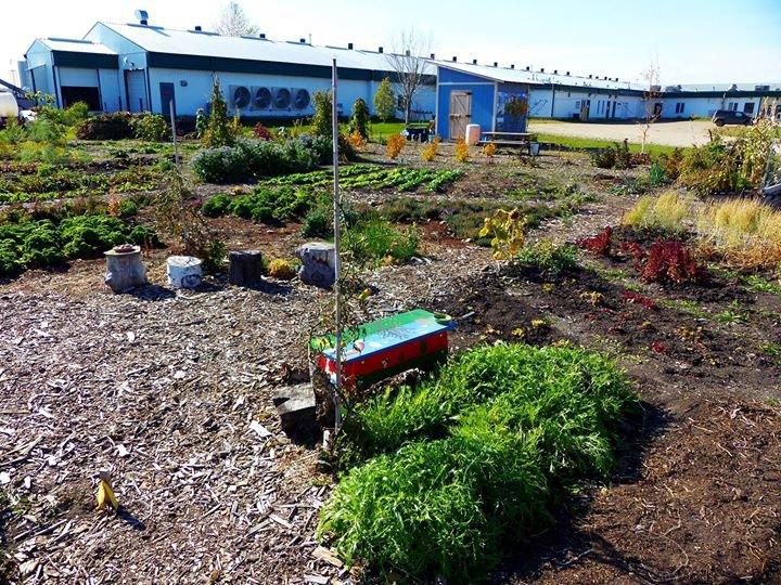 Prairie Urban Farm cover