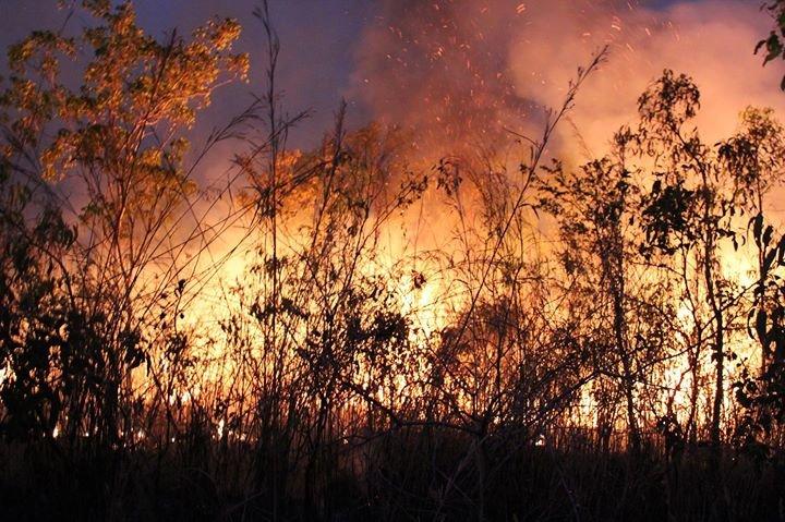 Bushfires NT cover