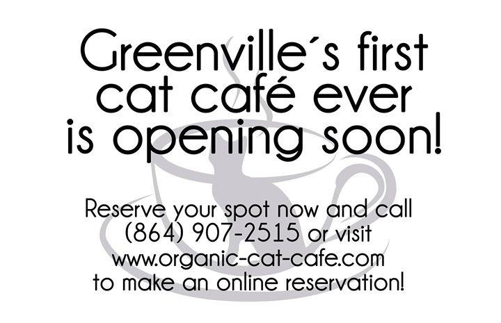 Organic Cat Café cover