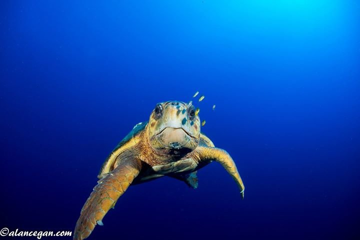 Sea Turtle Foundation cover