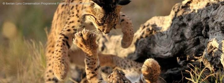 WWF Big Cats cover