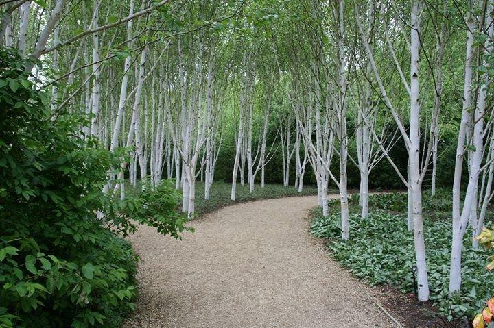Tracy Foster Garden Design cover