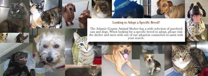 Atlantic County Animal Shelter cover