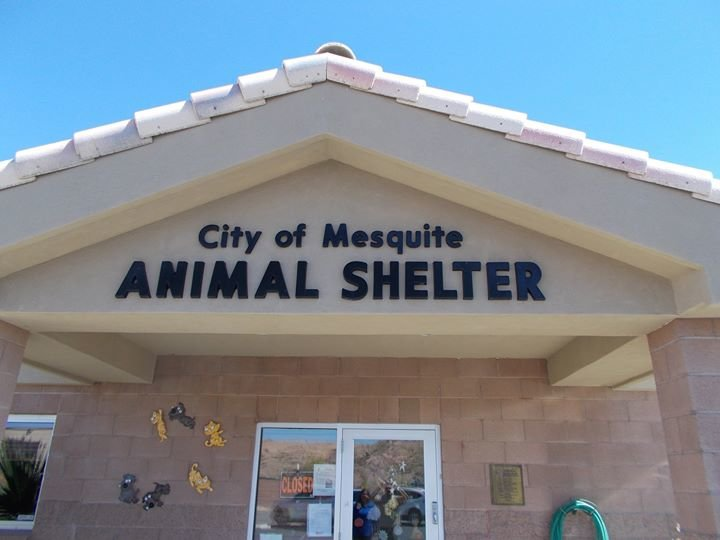 Mesquite NV Animal Control cover
