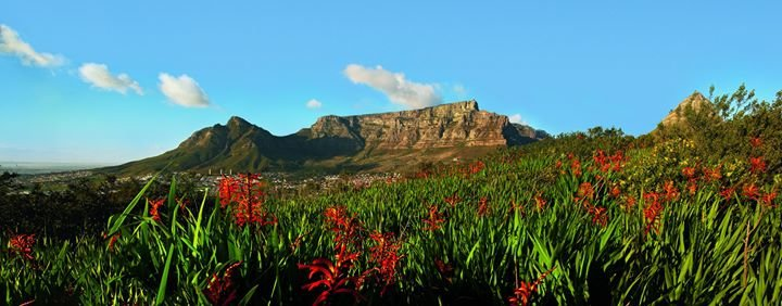 SANParks - Table Mountain National Park cover