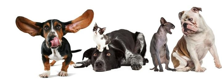 Animal Care Equipment & Services LLC cover