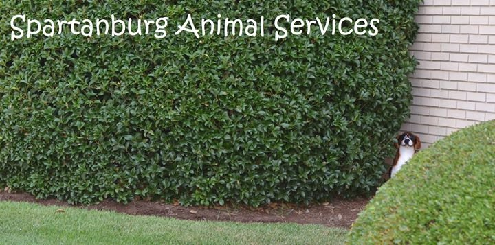 Spartanburg Animal Services cover