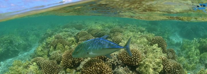 National Marine Protected Areas Center cover