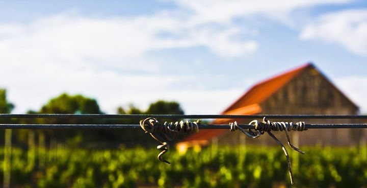 Coquelicot Estate Vineyard cover