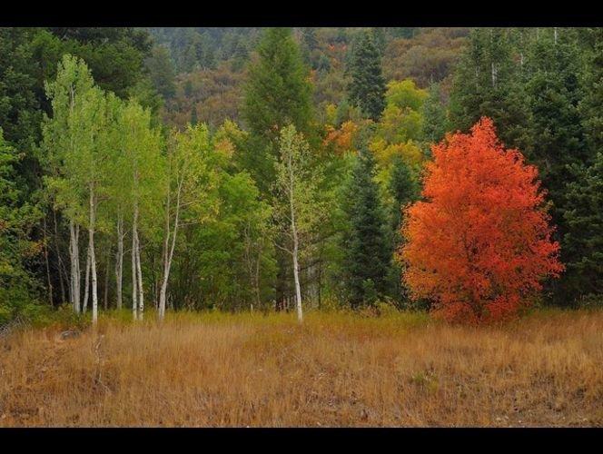 I Love Utah by KSL cover