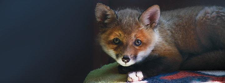 Blue Ridge Wildlife Center cover