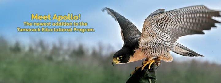 Tamarack Wildlife Rehabilitation and Education Center cover