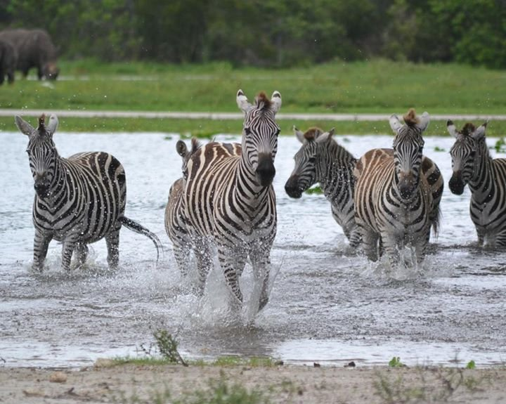 Lion Country Safari cover