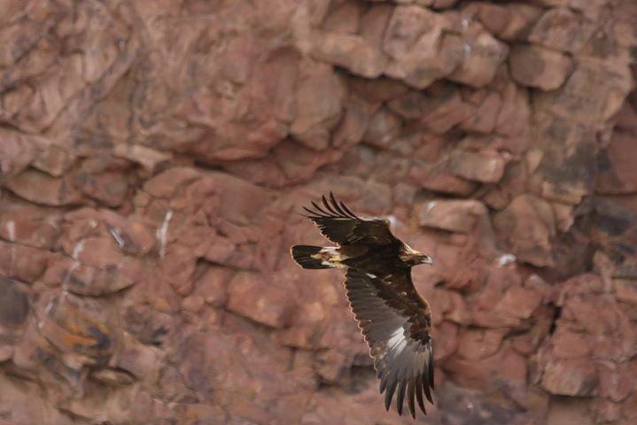 Browns Park National Wildlife Refuge cover