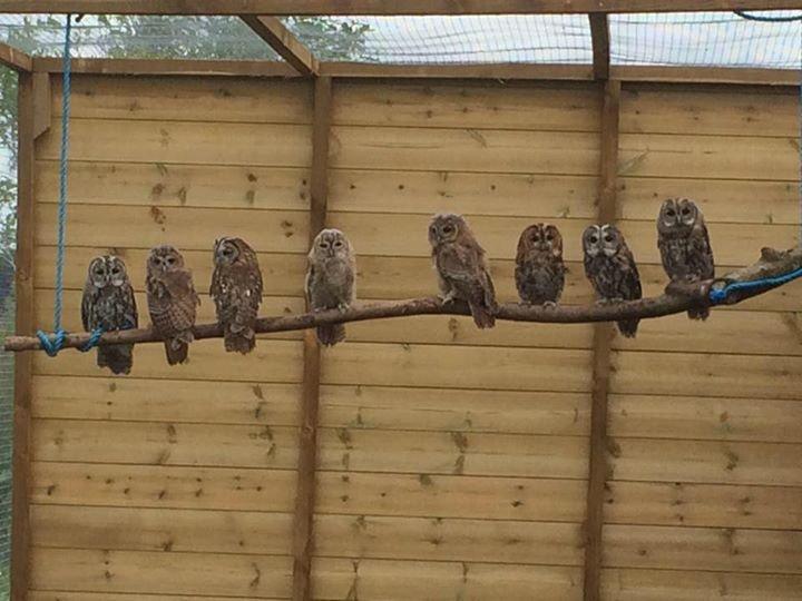 Screech Owl Sanctuary cover