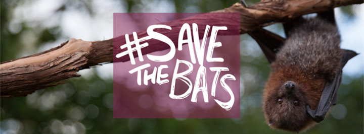 Organization for Bat Conservation & Save the Bats cover