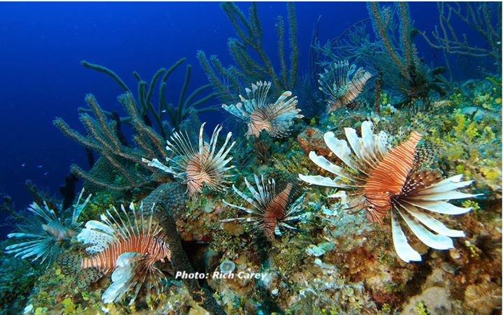 REEF Invasive Lionfish Program cover