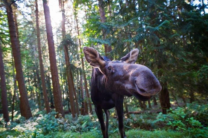Northwest Trek Wildlife Park cover