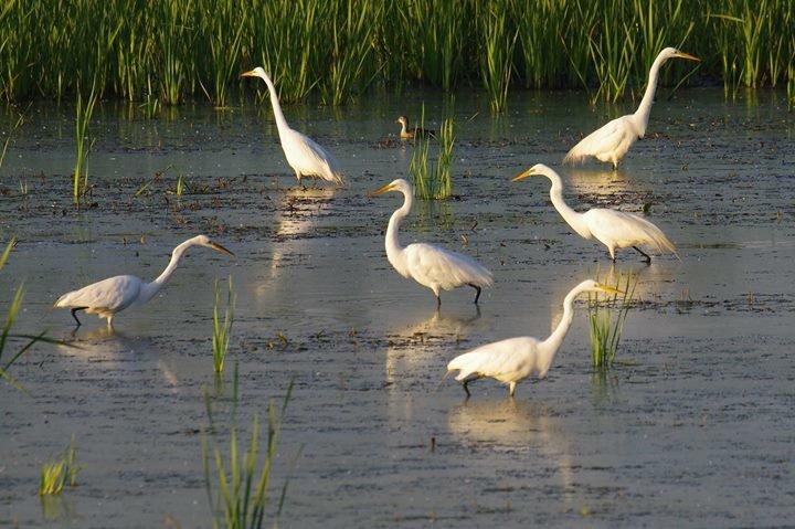 Shiawassee National Wildlife Refuge cover