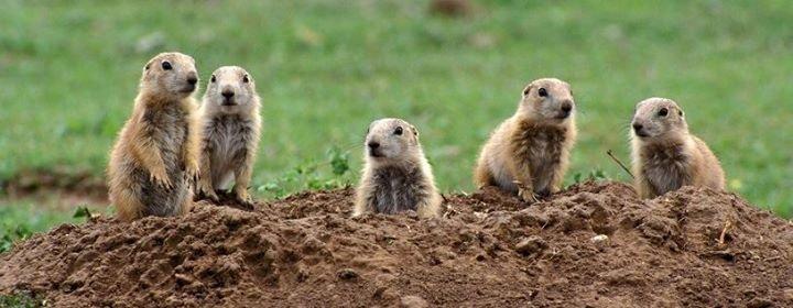 Humane Society Wildlife Land Trust cover