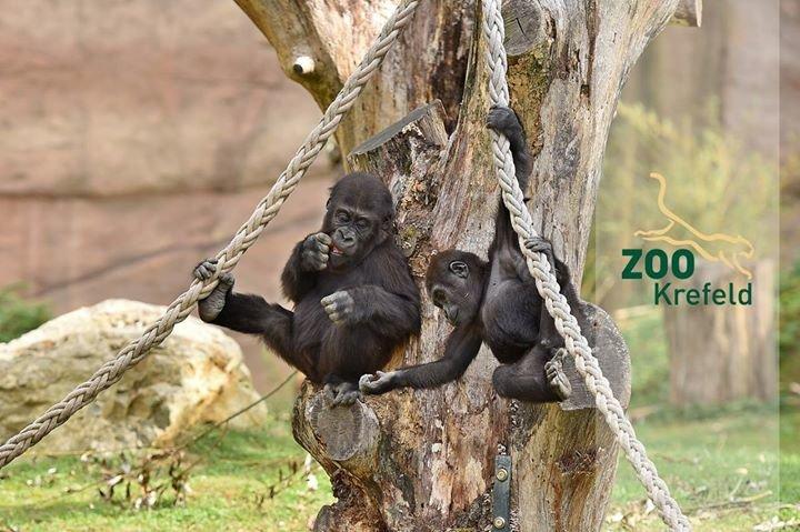 Zoo Krefeld cover