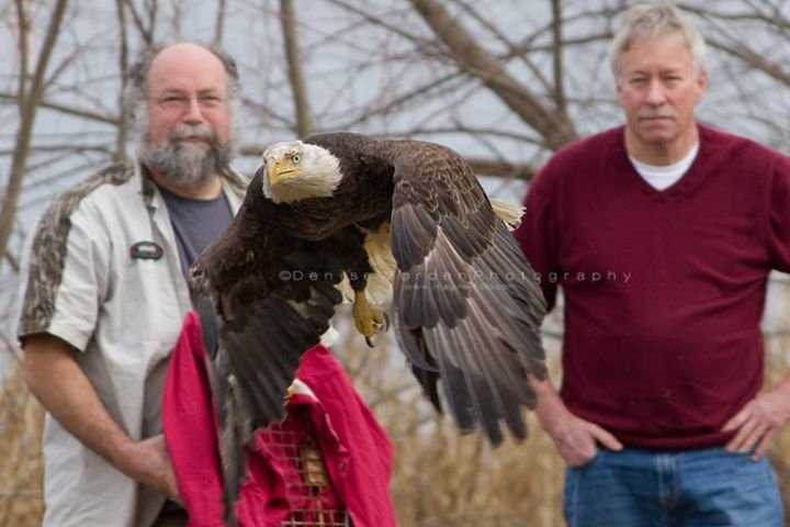 American Wildlife Refuge cover