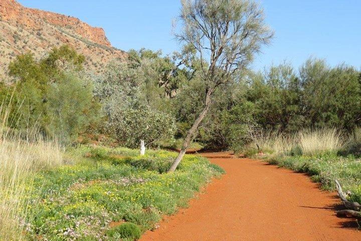 Alice Springs Desert Park cover