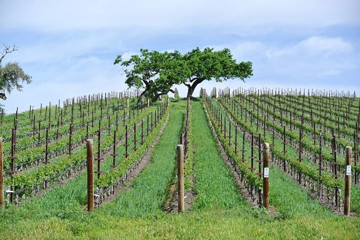 Gainey Vineyard cover