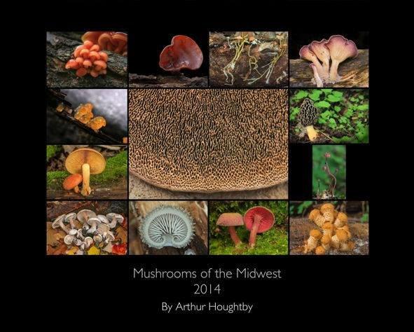 Illinois Mycological Association cover