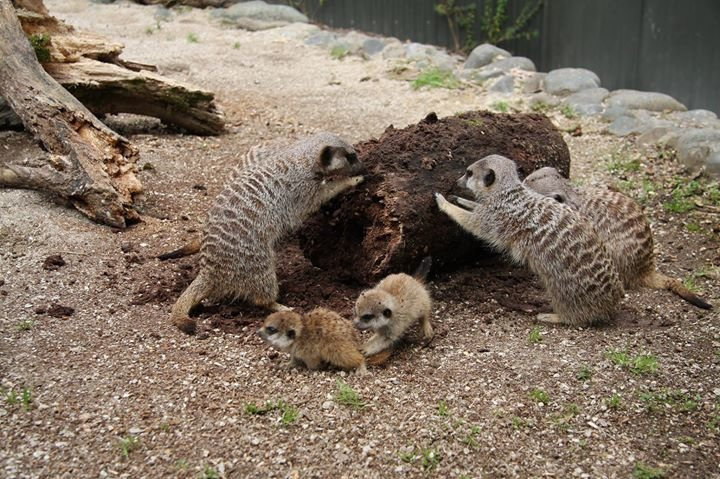 Hamilton Zoo cover