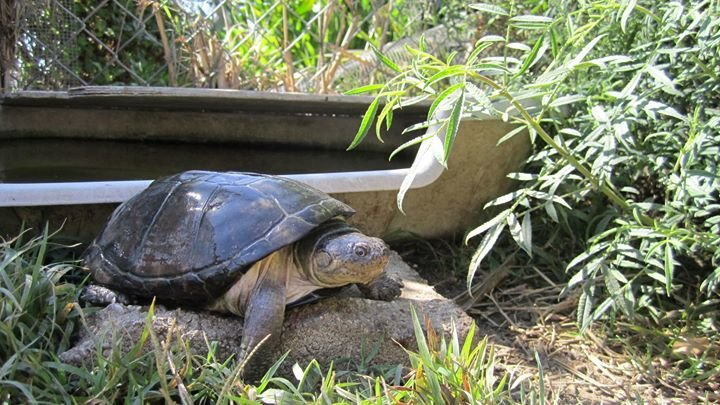 American Tortoise Rescue cover