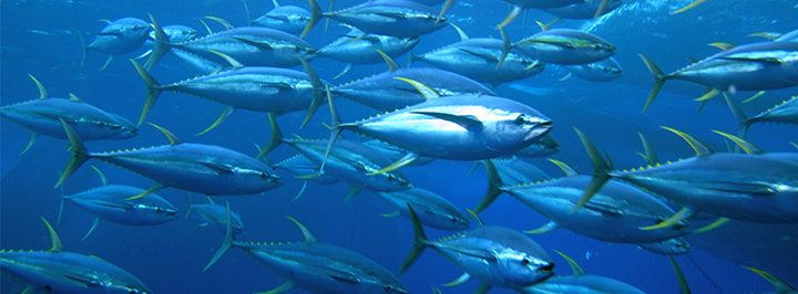 NOAA Fisheries Pacific Islands cover