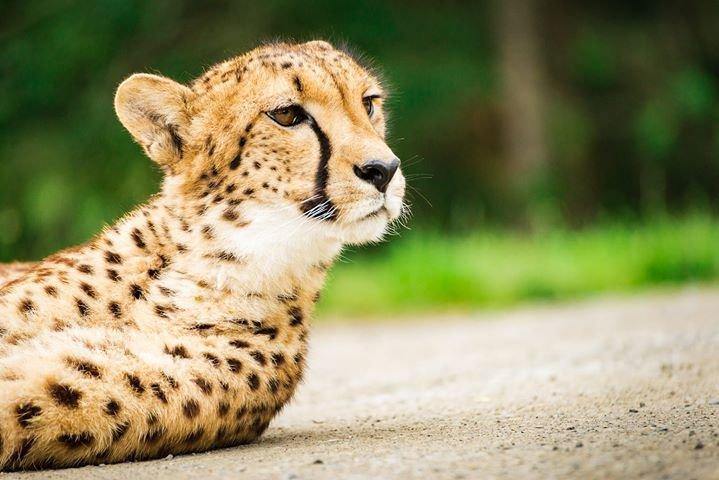 Wildlife Safari cover