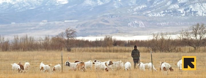 East African Refugee Goat Project of Utah cover
