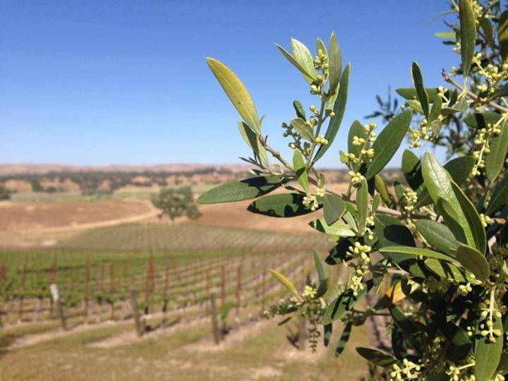 August Ridge Vineyards cover