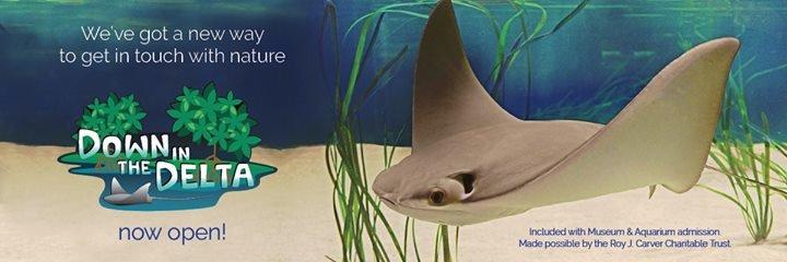National Mississippi River Museum & Aquarium cover