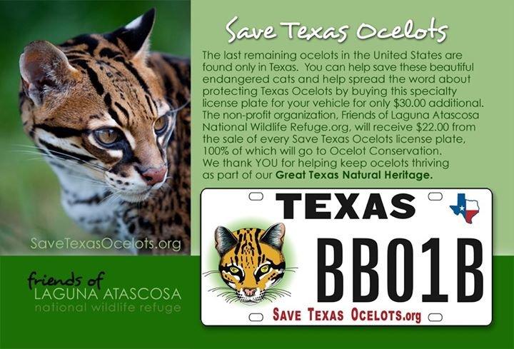 Viva the Ocelot, Friends of Laguna Atascosa National Wildlife Refuge cover