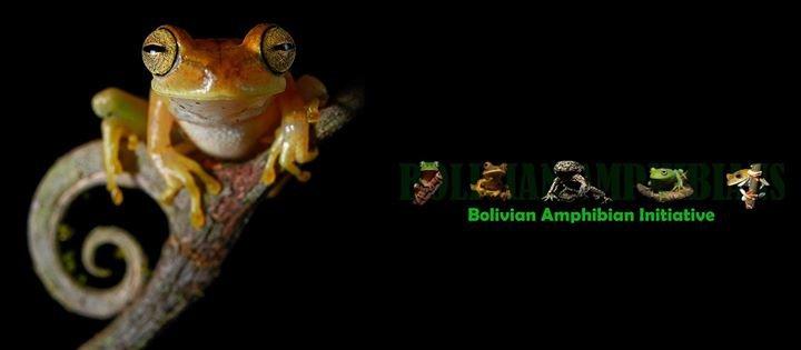 Bolivian Amphibian Initiative cover
