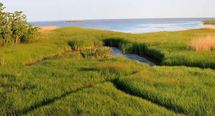 Mobile Bay National Estuary Program cover