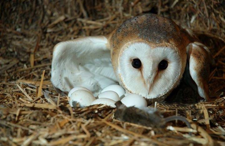 Wings of Love Owls - Bookings & Merchandise cover